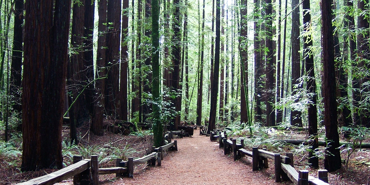 Armstrong Woods, Sonoma County