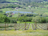 Vineyard Development